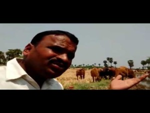 shepherd Neela Narasimhulu song on importance of water